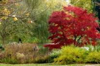 Der rote Baum