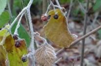 Blätter im Wald
